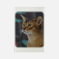 Abyssinian Cat AA025D-018 Rectangle Magnet