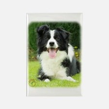 Border Collie 9A014D-14 Rectangle Magnet