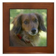 Framed Tile long haired dachshund dog