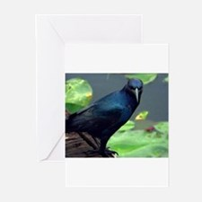 Everglades Boat Tailed Grackl Greeting Cards (Pk o