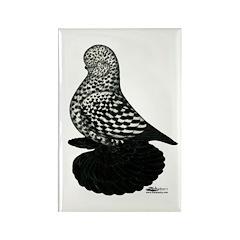 Splash Tumbler Pigeon Rectangle Magnet (10 pack)