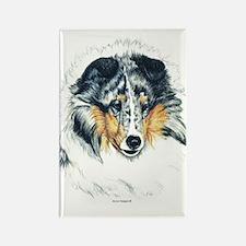 Blue Merle Shetland Sheepdog Rectangle Magnet