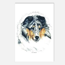 Blue Merle Shetland Sheepdog Postcards (Package of