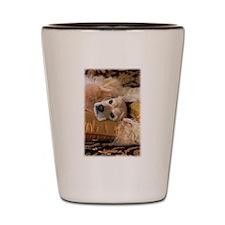 Cocker Spaniel-4 Shot Glass