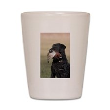 Curly Coated Retriever-6 Shot Glass