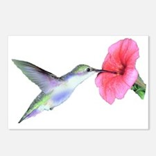 Humming Bird Postcards (Package of 8)