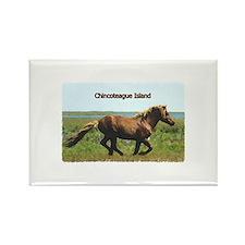 Chincoteague Island pony Rectangle Magnet
