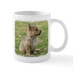 Swedish Vallhund Pup 9Y165D-131 Mug