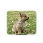 Swedish Vallhund Pup 9Y165D-131 Postcards (Package