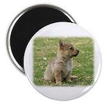 Swedish Vallhund Pup 9Y165D-131 Magnet