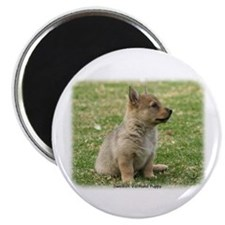Swedish Vallhund Pup 9Y165D-131 Magnet