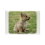 Swedish Vallhund Pup 9Y165D-131 Rectangle Magnet (