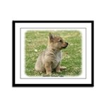 Swedish Vallhund Pup 9Y165D-131 Framed Panel Print