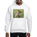 Swedish Vallhund Pup 9Y165D-131 Hooded Sweatshirt