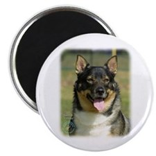 Swedish Vallhund 9K003D-10 Magnet