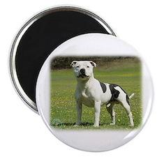Staffordshire Bull Terrier 9F46D-14 Magnet