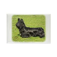 Skye Terrier 8P099D-13 Rectangle Magnet (100 pack)