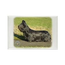 Skye Terrier 9C066D-16 Rectangle Magnet (100 pack)