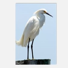 Great White Egret Postcards (Package of 8)