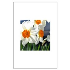 Daffodils Large Poster