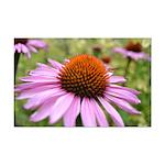 Nature's Flowers Mini Poster Print