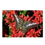 Butterfly on Red Flowers Postcards (Package of 8)