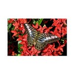 Butterfly on Red Flowers 38.5 x 24.5 Wall Peel