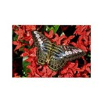 Butterfly on Red Flowers Rectangle Magnet (10 pack