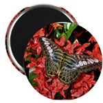 Butterfly on Red Flowers Magnet