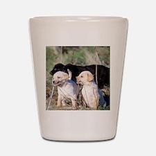 Labrador Puppies Shot Glass