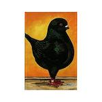 Schietti Modena Pigeon Rectangle Magnet (100 pack)