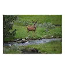 Funny Deer Postcards (Package of 8)