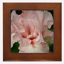 Floral and Plant Life Framed Tile