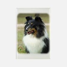 Shetland Sheepdog 9J090D-04 Rectangle Magnet (10 p