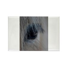 Cute Fjord horse Rectangle Magnet