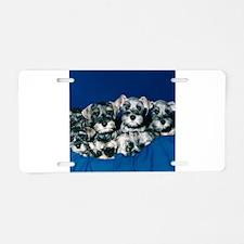 Schnauzer Puppies Aluminum License Plate