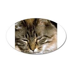 Sleepy Cat 22x14 Oval Wall Peel