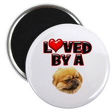 Loved by a Pekingnese Magnet