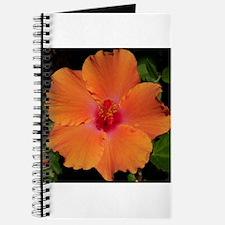 Hibiscus Flower~eccopatterns. Journal