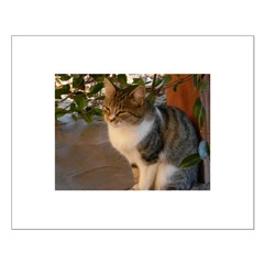 Tabby Cat Love Posters