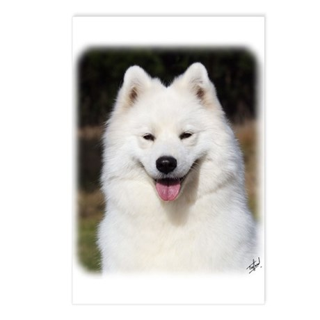 Samoyed 9Y602D-124 Postcards (Package of 8)