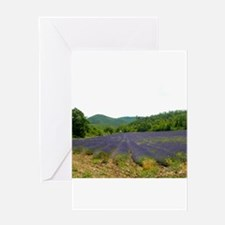 Lavender Fields Greeting Card