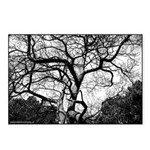 Ghost Tree Postcards (Package of 8)