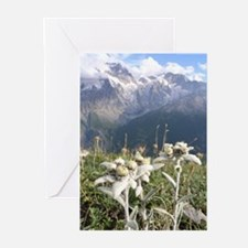 German Edelweiss MountainGreeting Cards (Pk of 10)