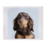 Animals dogs daschund Fleece Blankets