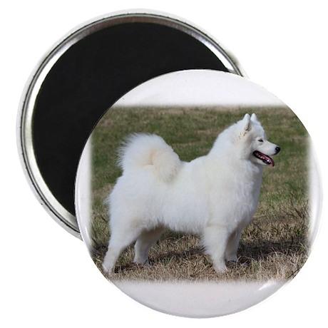 "Samoyed 9Y602D-004 2.25"" Magnet (10 pack)"