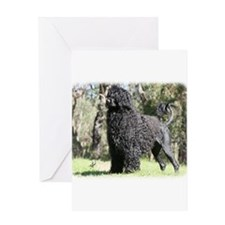 Portuguese Water Dog 9Y510D-008 Greeting Card