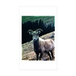 Mountain Sheep Sticker (Rectangle 50 pk)