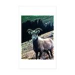 Mountain Sheep Sticker (Rectangle 10 pk)