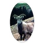 Mountain Sheep Sticker (Oval 50 pk)